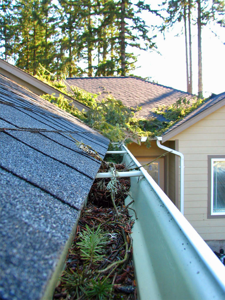Roof Cleaning Gutter Cleaning Amp Moss Treatment Clearly